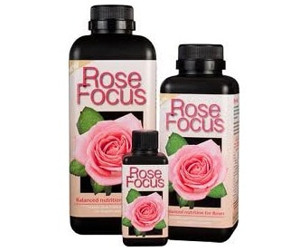 ROSE FOCUS PER ROSE