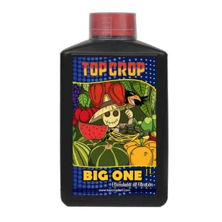 BIG ONE - TOP CROP