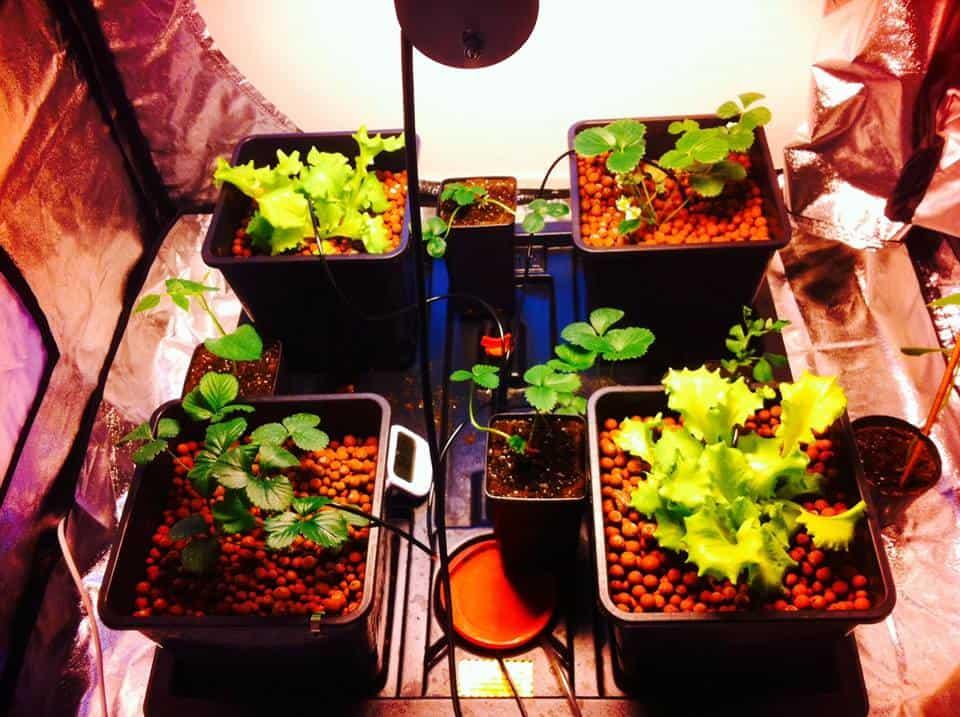 Botanica Urbana GrowShop Ivrea