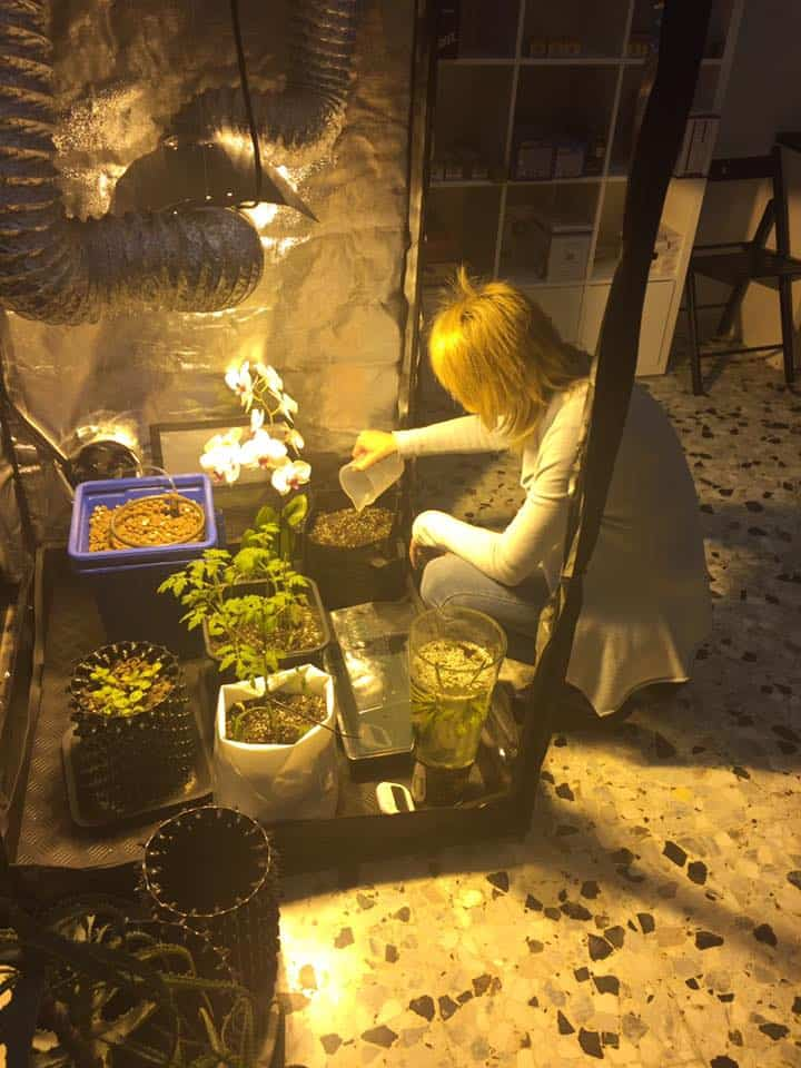 Botanica Urbana GrowShop Noventa
